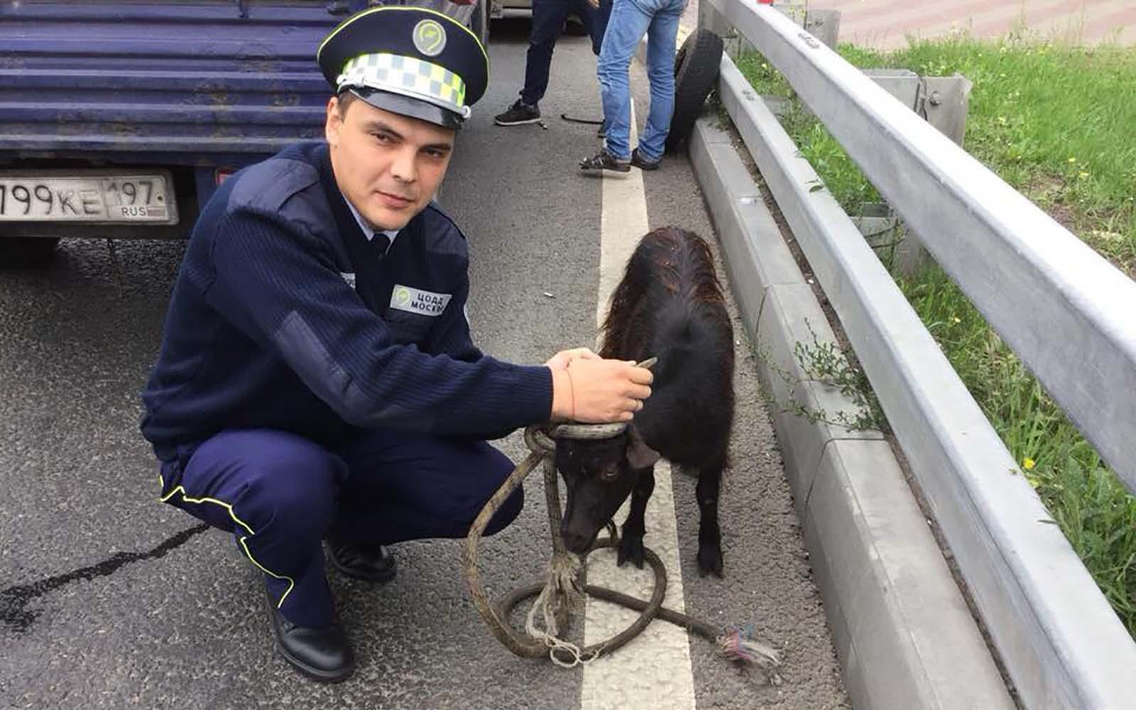 Козлы и котики: чем занимается «Дорожный патруль» в Москве