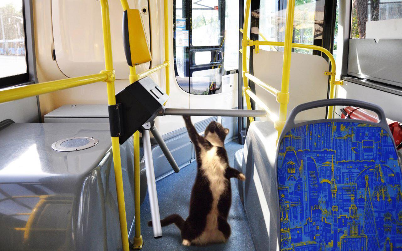 Москвичей просят делать селфи в автобусах. Напоследок