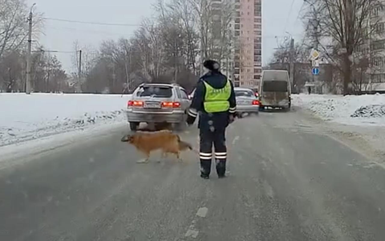 История отом, как гаишник собаку через дорогу переводил